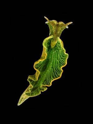 solar slug