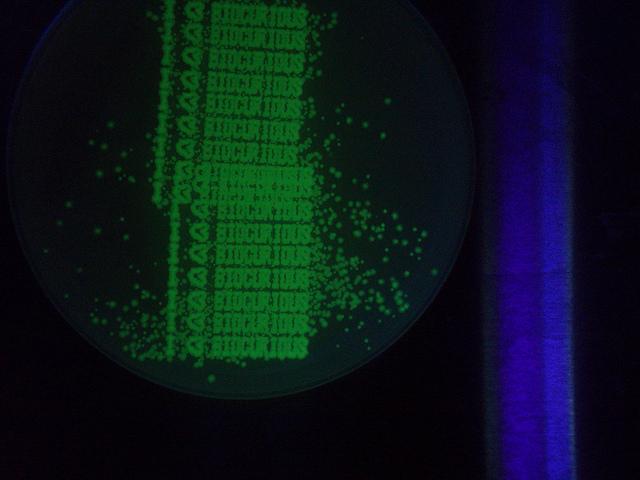 bioprint petri dish